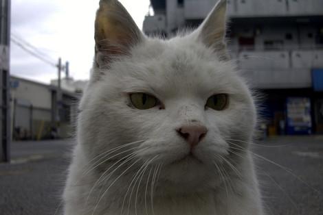 Shiro194