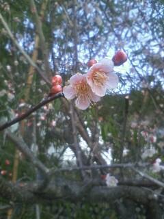 春を探しに 5