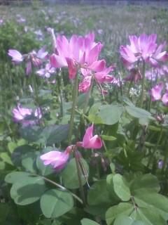 道端の花たち 1