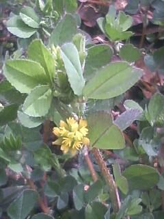 道端の花たち 3