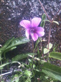 道端の花たち 4