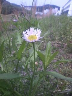 道端の花たち 5