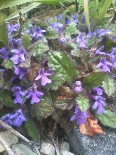 道端の花たち 2