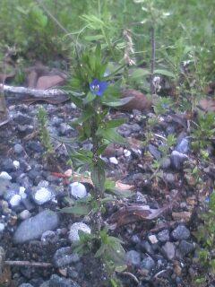 道端の花たち 11
