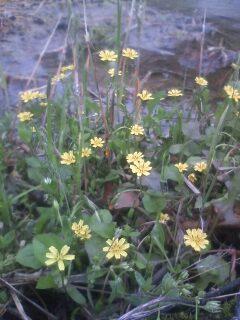 道端の花たち 12