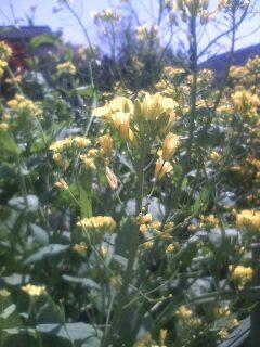 道端の花たち 13