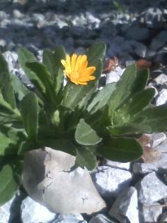 道端の花たち 14