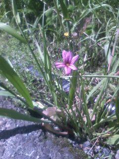 道端の花たち 15