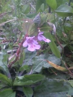 道端の花たち 17