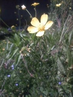 道端の花たち 19