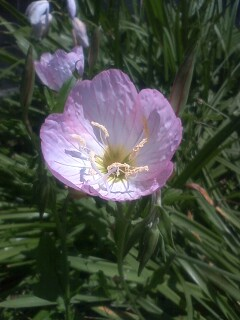 道端の花たち 22
