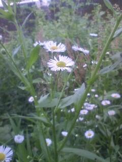 道端の花たち 23