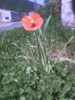 道端の花たち 27