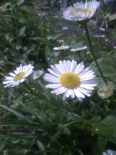 道端の花たち 29