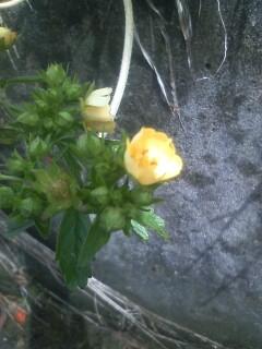 道端の花たち 33