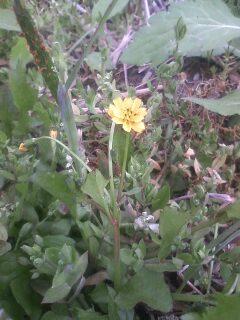 道端の花たち 34