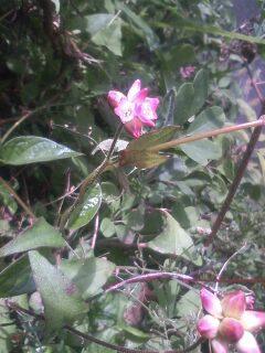 道端の花たち 36