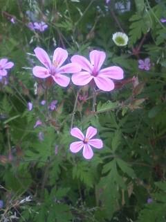道端の花たち 37