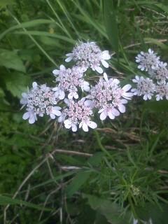 道端の花たち 39