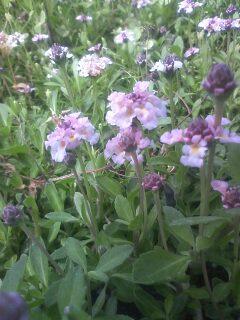 道端の花たち 42