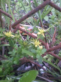 道端の花たち 44