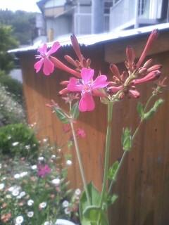 道端の花たち 45