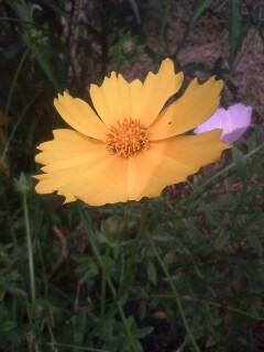 道端の花たち 47