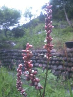 道端の花たち 49