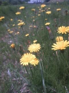 道端の花たち 56