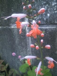 道端の花たち 62