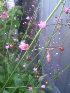 道端の花たち 71
