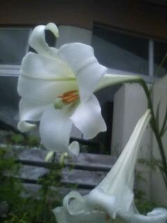 道端の花たち 76