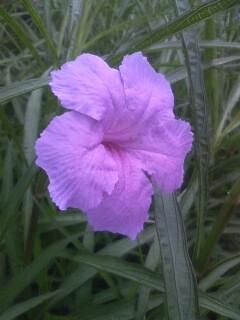 道端の花たち 81