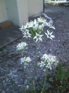 道端の花たち 83