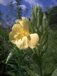 道端の花たち 85