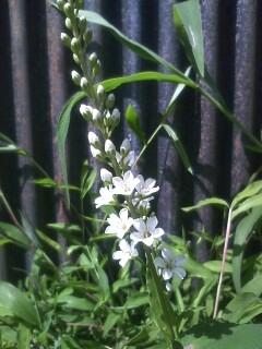 道端の花たち 87