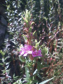 道端の花たち 89