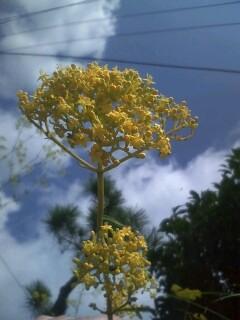 道端の花たち 105