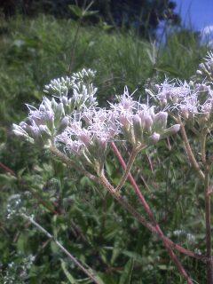 道端の花たち 107