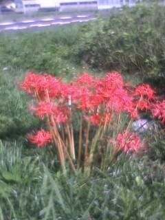 道端の花たち 108