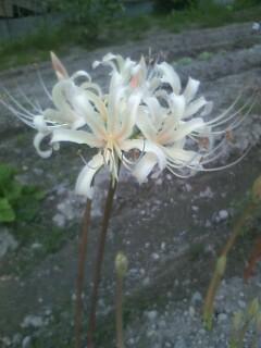 道端の花たち[108]のおまけ
