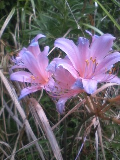 道端の花たち 112