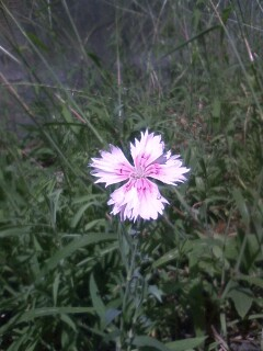 道端の花たち 116
