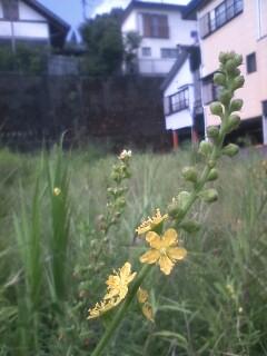 道端の花たち 119