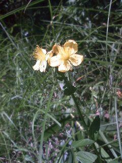 道端の花たち 120