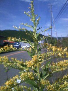 道端の花たち 125