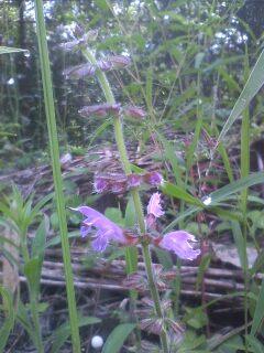 道端の花たち 131