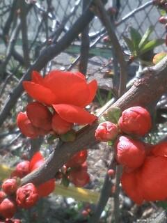 花あるき・2011 [24] ボケ