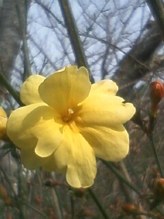 花あるき・2011 [39] ウンナンオウバイ