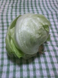 収穫物2012 菜園編 レタス